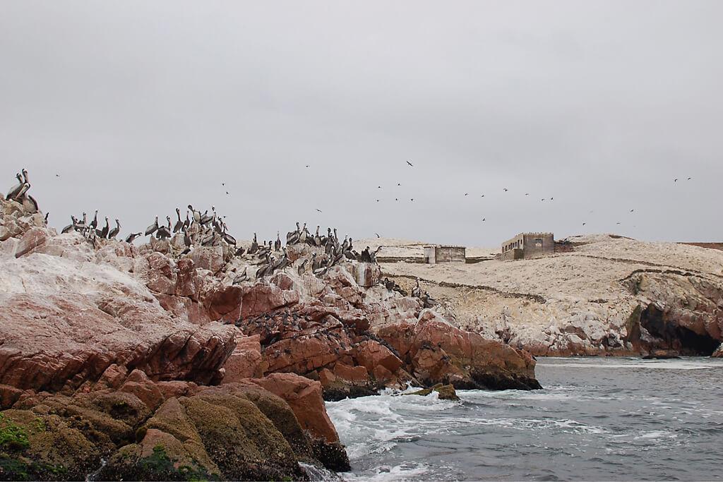 Vögel auf den Klippen der Islas Ballestas