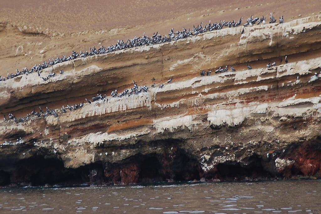 Tausende Vögel bevölkern die Islas Ballestas in Peru