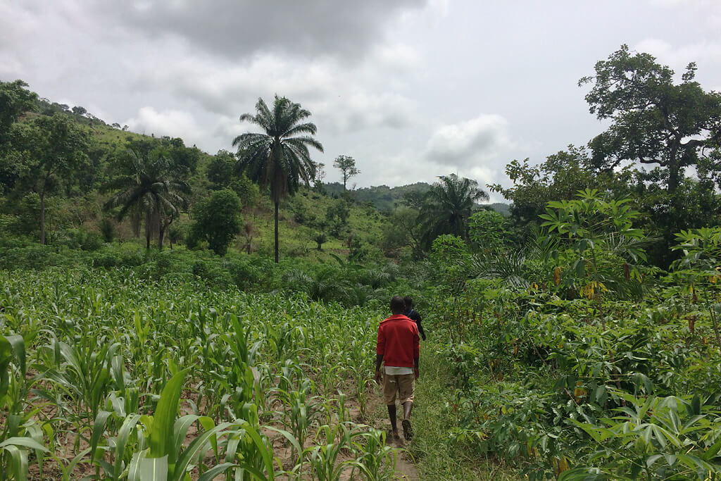 Wanderung zum Wasserfall Gbaledza bei Kpalimé