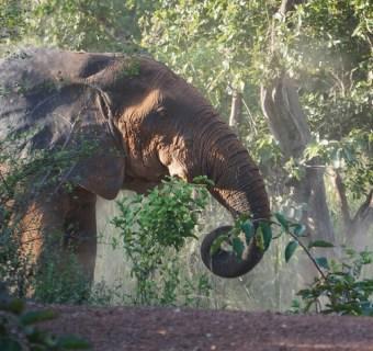 Safari in Ghana: Mole National Park und Co