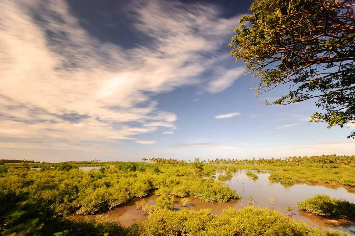 The swampy area along Baigad Road, Bantayan Island