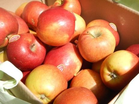 Gratis Bio-Äpfel gibt's am Zurück zum Ursprung Stand ...