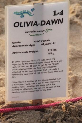 Olivia Dawn Laniakea Beach
