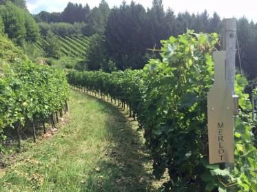 Hinweistafeln im Weingarten