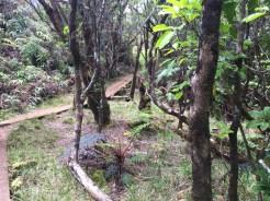 WaimeaCanyon020