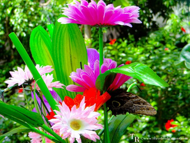 Enjoy Colors!! Welcome to the butterfly house in Vienna, Austria, Travel Realizations