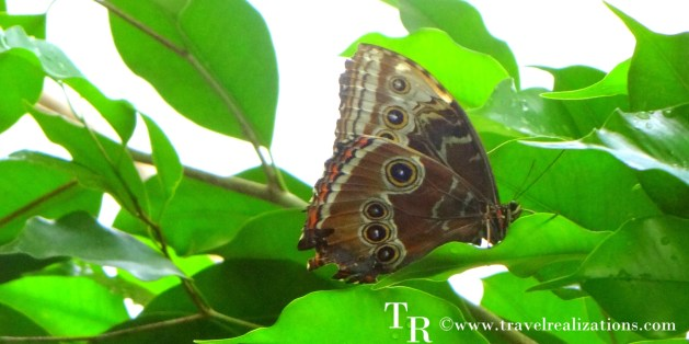 Enjoy Colors!! Welcome to the butterfly house in Vienna, Austria.