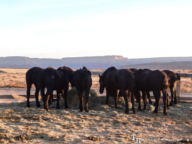 Ranch, Hualapai Ranch, Horses, Grand Canyon West Rim, Travel Realizations