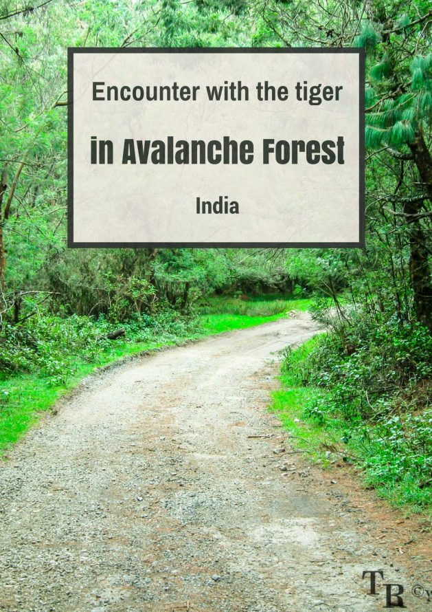 Travel Realizations, Honeymoon, encounter with the tiger, adventure