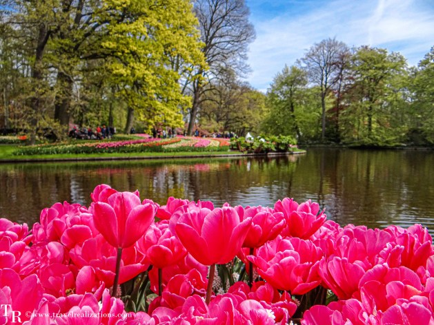 Keukenhof - World's largest flower garden in Lisse, Netherlands - A photo essay, Travel Realizations, Tulip Garden
