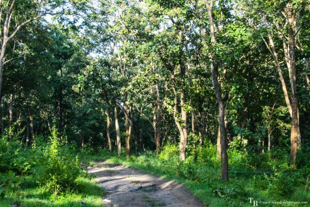 Travel Realizations, forest safari, Mudumalai, Mudumalai Tiger Reserve, Mudumalai wildlife sanctuary, tiger reserve