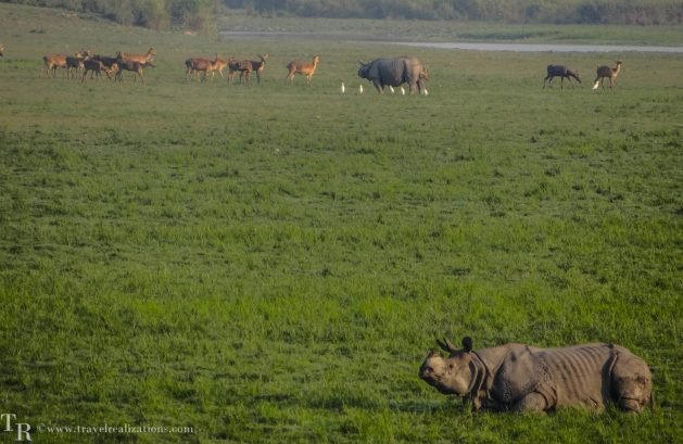 Travel realizations, forest, Kaziranga forest, India, India's top 4 forests to go for a wildlife Safari, Wildlife safari