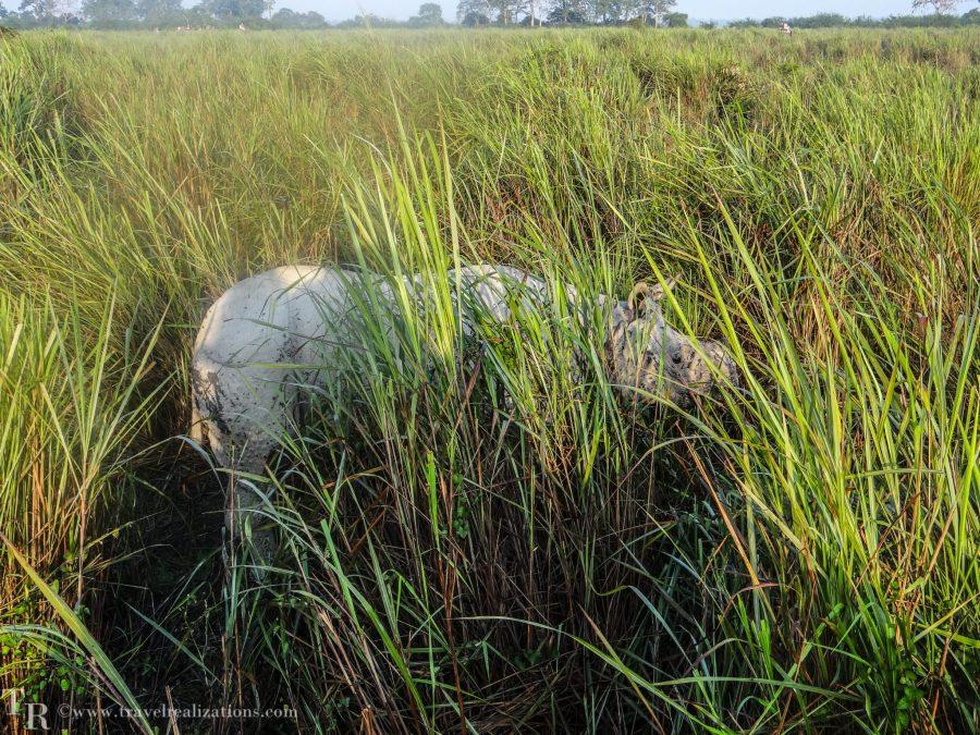Travel Realizations, Kaziranga, elephant safari, forest safari