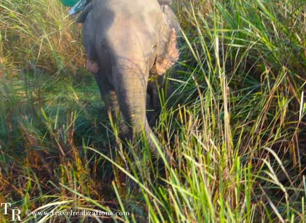 Travel Realizations, Kaziranga, elephant safari, forest safari