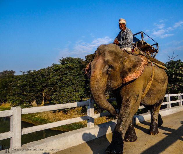Travel Realizations, Kaziranga, elephant safari, forest safari, Indian forest safaris