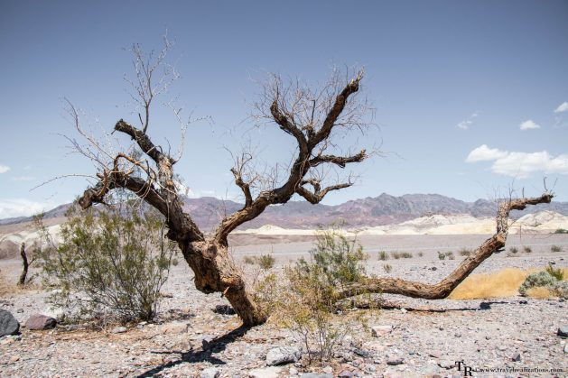 Death Valley National Park- A water-less wonder, Travel Realizations, Photo Essay, Death Valley