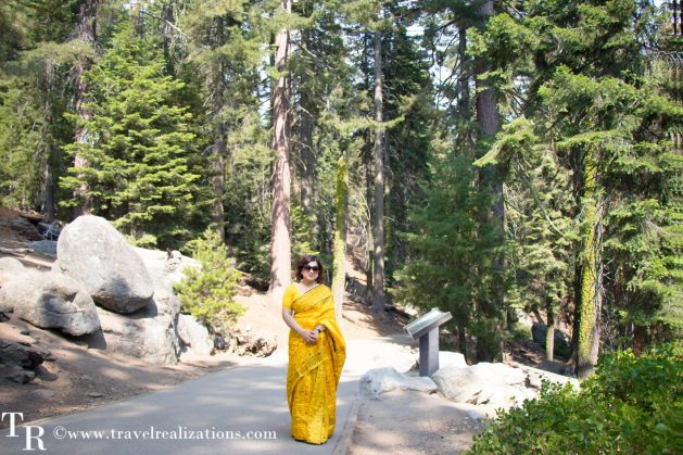 Travel Realizations, General Sherman, the largest tree on earth, giant sequoia tree, Giant Forest of Sequoia National Park, California, The Sherman Tree Trail