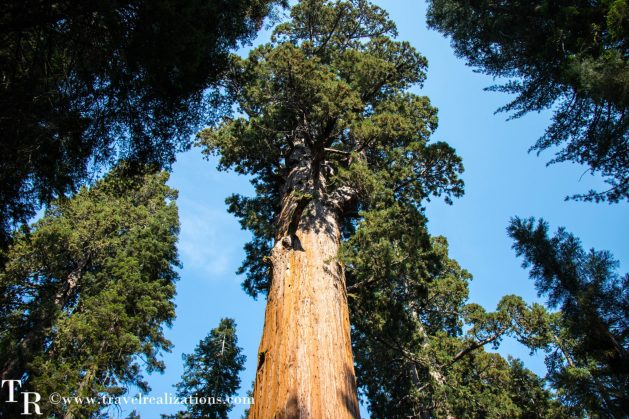 Travel Realizations, General Sherman, the largest tree on earth, giant sequoia tree, Giant ForestofSequoia National Park, California, The Sherman Tree Trail