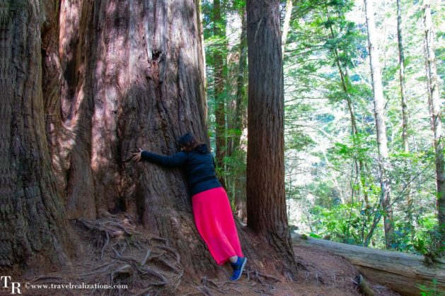 Rendezvous with Redwood trees in the Redwood National Park, California - The tallest trees on earth, Travel Realizations, Lady Bird Johnson Grove , tree hug
