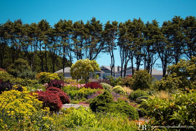 Mendocino Coast Botanical Gardens - A Photo Essay, Travel Realizations