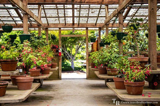 Mendocino Coast Botanical Gardens - A Photo Essay, Travel Realizations