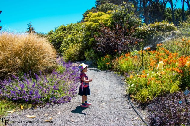 Mendocino Coast Botanical Gardens - A Photo Essay, Travel Realizations, Chirantana, a small baby