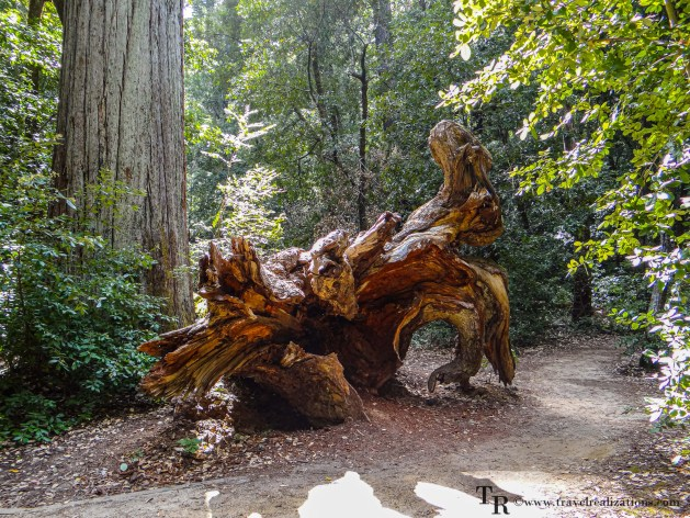 Easy Day Trips from San Francisco - A local's guide, Big Basin Redwoods State Park