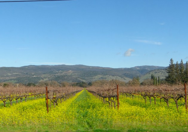 Easy Day Trips from San Francisco - A local's guide, Napa Valley