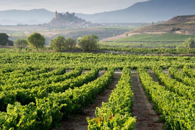 Vineyard, San Vicente de la Sonsierra as background, La Rioja