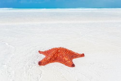 Starfish Cuba