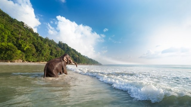 Havelock Island, Andaman Islands