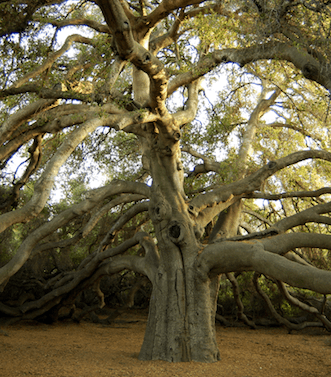 GreatOak