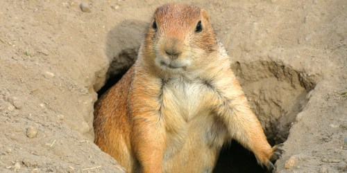 o-prairie-dogs-facebook