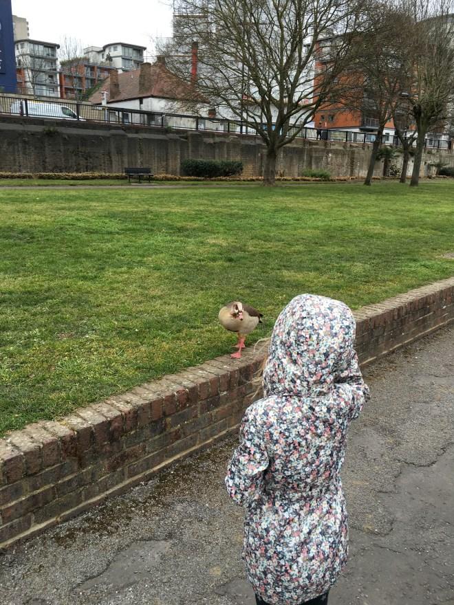 Feeding ducks in London