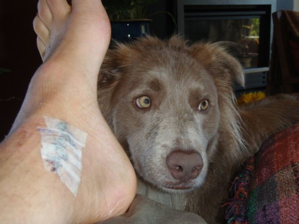 Canine Caregiver - Stella Luna