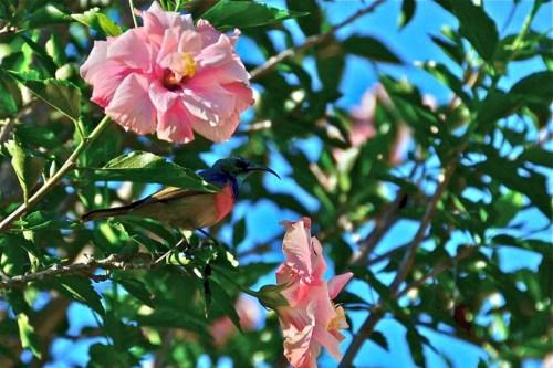 I saw my first sunbird!