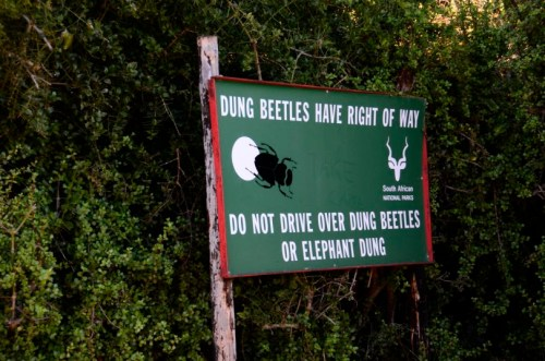 Dung Beetles have right away
