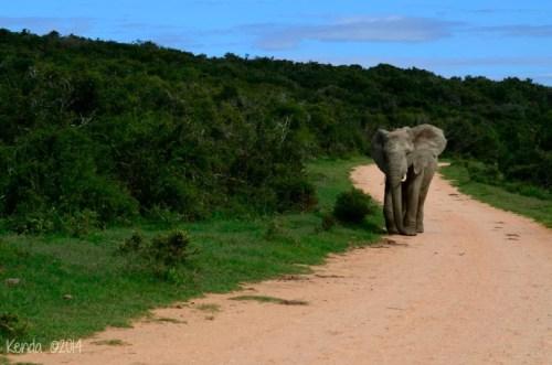 elephants Addo National Park