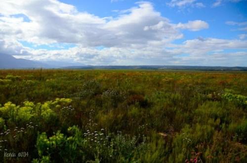 Fynbos of Bontebok National Park