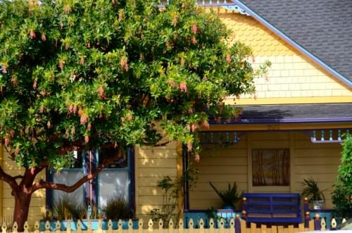 Pacific Grove Beauty