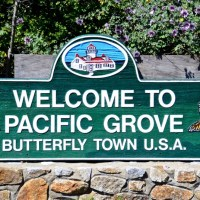 Guess Who Lives in Charming Butterfly Town USA?