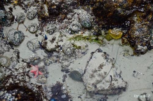 sea life Pacific Grove