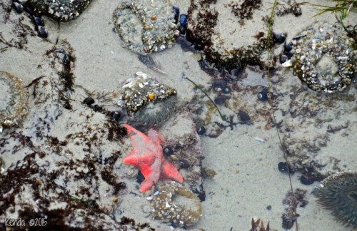Brilliant Sea Stars and Anemone abound! Remember: Don't be an enemy of the anemone. Look but don't touch. They stress easily.