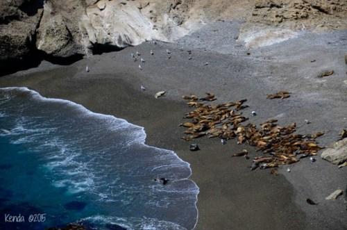 Sea Lion_DSC2912_Point Lobos