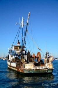 Monterey Bay Whale Watch