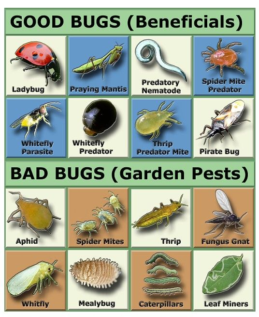 Good Bug Bad Bug (source unknown)