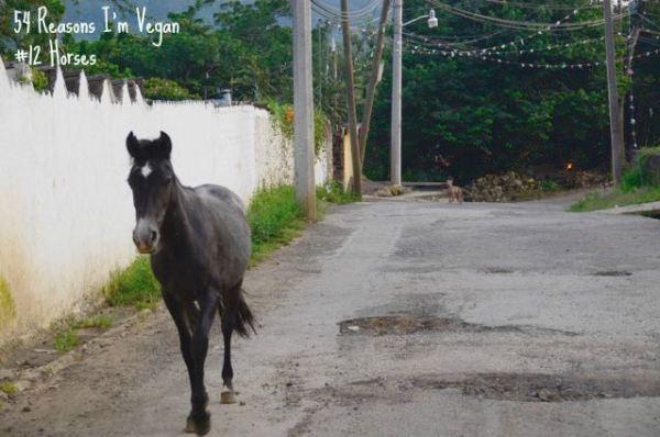54 Reasons I'm vegan_12 Horses