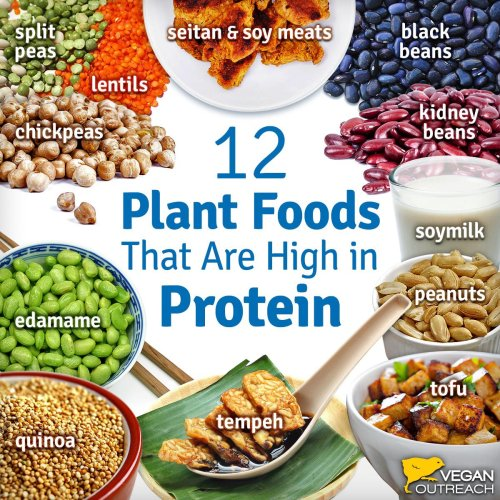 12-protein-plant-foods
