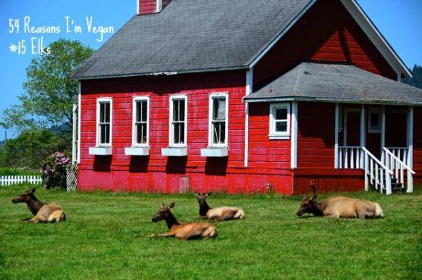54 Reasons I'm Vegan_15 Elks