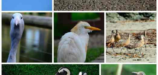 54 Reasons I'm Vegan: Marine Life and Birds (31-38)